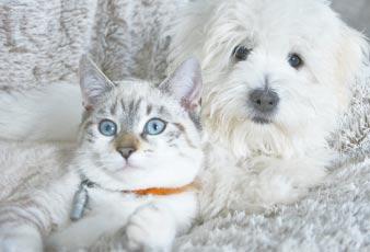 La sophrologie pour animaux