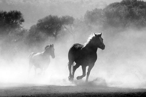 Sophrologie pour les cavaliers